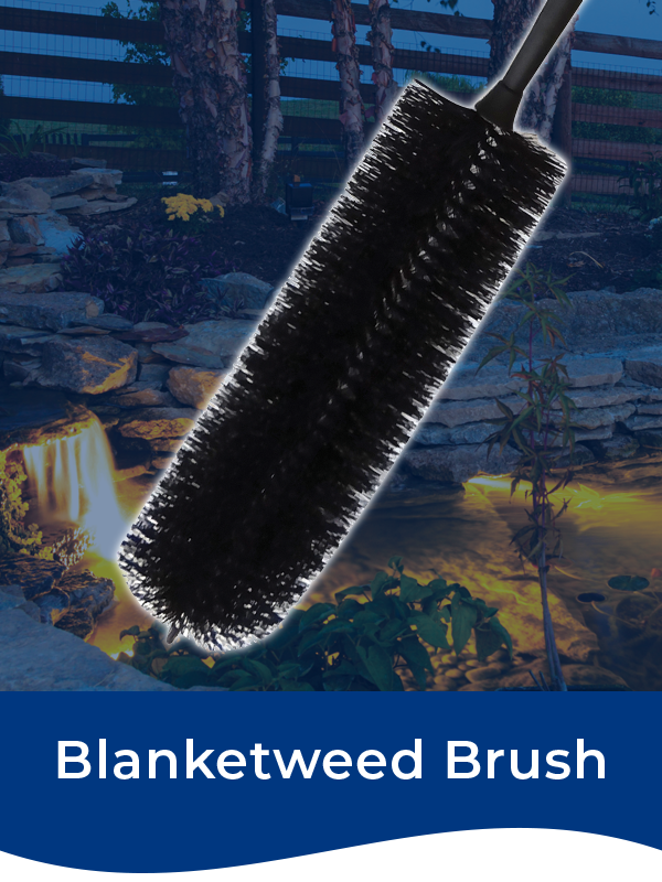 Bermuda Blanketweed Brush