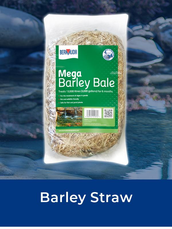 Bermuda Barley Straw
