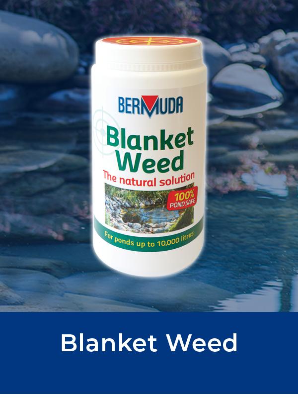 Bermuda Blanket Weed