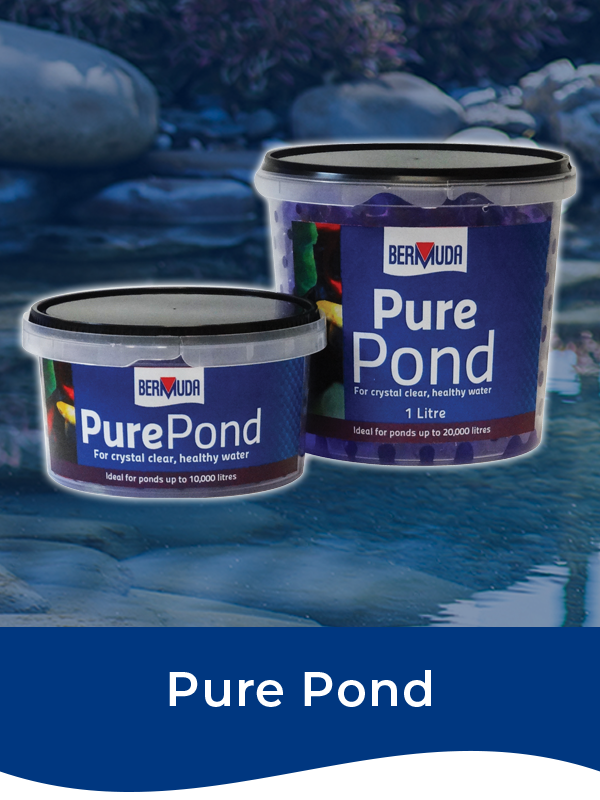 Bermuda Pure Pond