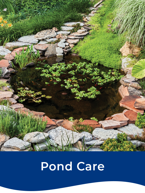 Bermuda Pond Care