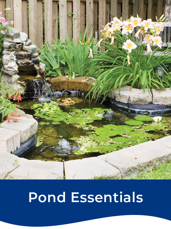 Bermuda Pond Essentials
