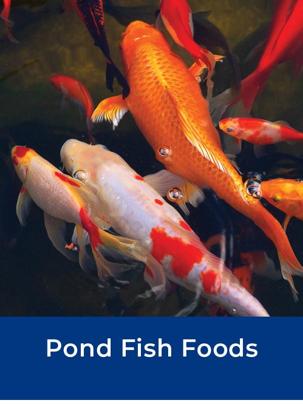 Bermuda Fish Foods